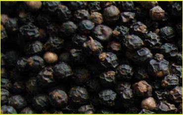 Vietnam Black Pepper - TINMAI CO , LTD
